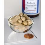 Kidney Essentials